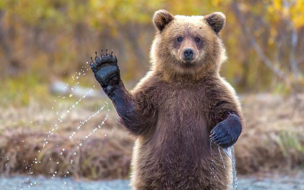 Bà Gấu
