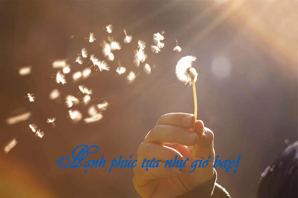 Hạnh phúc tựa như gió bay - Review Hạnh phúc tại tâm Osho