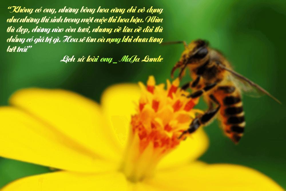 Lịch sử loài ong review