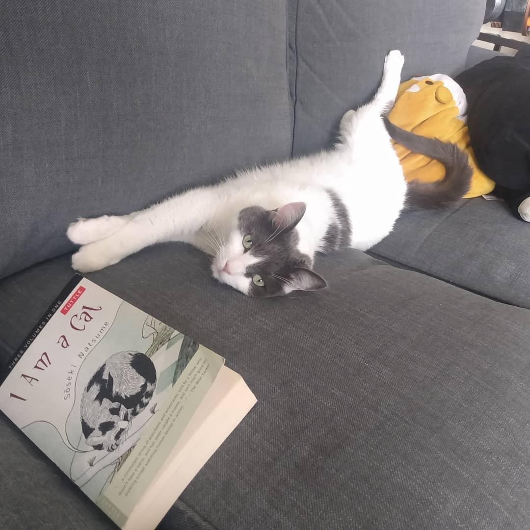 Ảnh tommy.slick Tôi là con mèo reviewsachonly